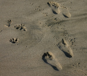 foot-pawprints